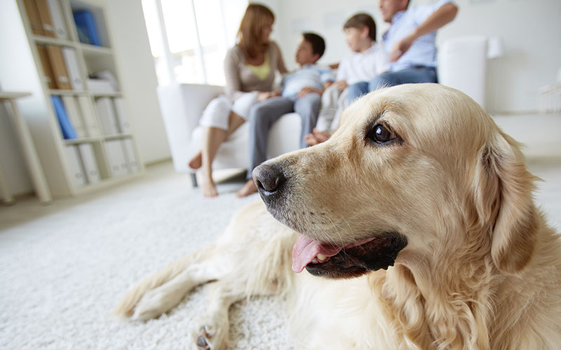 Dog hanging out on carpet in front of family